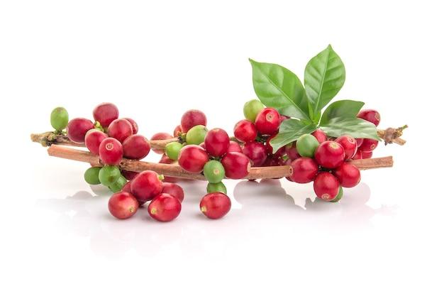 Grains de café frais avec des feuilles sur fond blanc Photo Premium