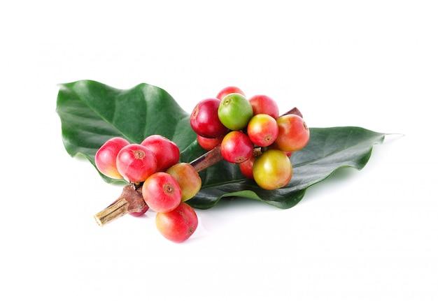 Grains de café frais isolés sur blanc Photo Premium