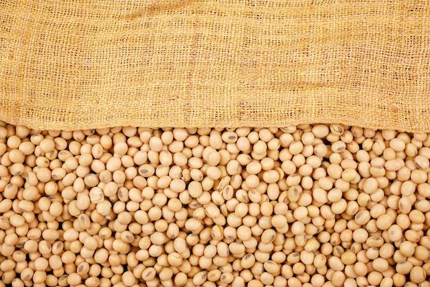 Grains De Soja Photo Premium