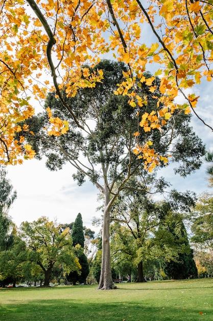 Grand arbre et feuille d'automne Photo gratuit