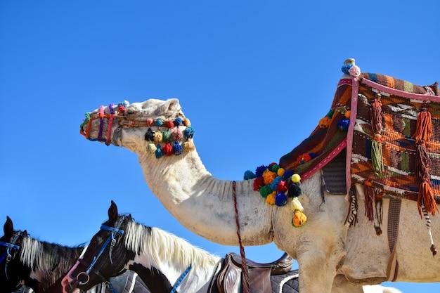 Un grand chameau dans une tenue colorée et un cheval marchent le long du sable contre le ciel bleu Photo Premium