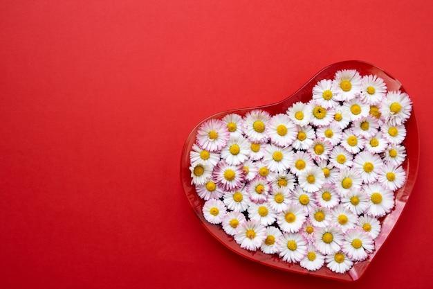 Grand coeur de fleurs de marguerite sur fond rouge. espace de copie, vue de dessus. fond de vacances. Photo Premium