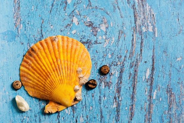 Grand coquillage orange sur une table en bois bleue Photo Premium