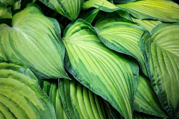 Grand fond de feuilles vertes. texture et motif de plantes, feuilles, fleurs. Photo Premium