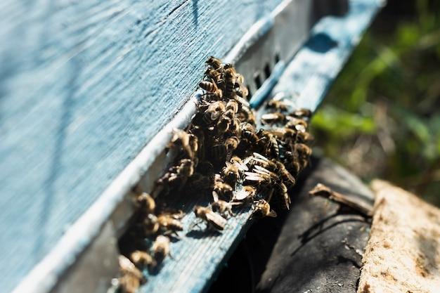 Grand groupe d'abeilles en dehors de la ruche Photo gratuit