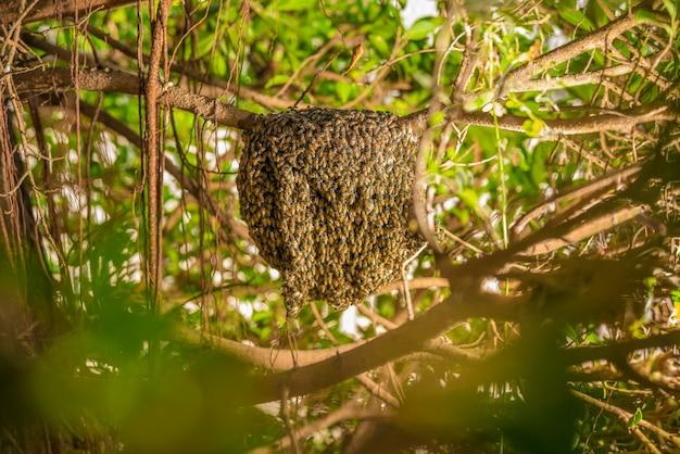 Grand Nid D'abeille Sur L'arbre Dans La Forêt Tropicale Humide. Photo Premium