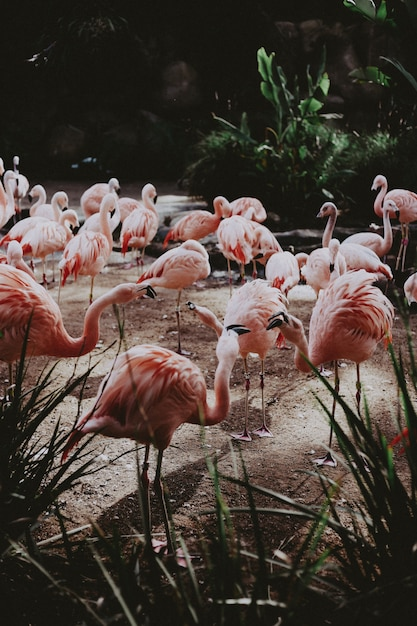 Grand Troupeau De Beaux Flamants Roses Dans Un Champ Tropical Exotique Photo gratuit