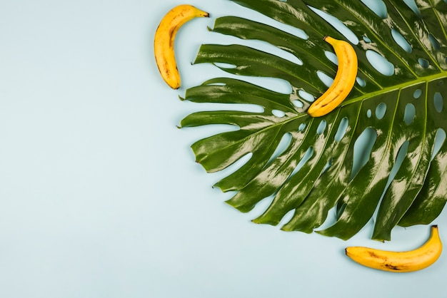 Grande Feuille De Monstera Verte Parmi Les Bananes Photo gratuit
