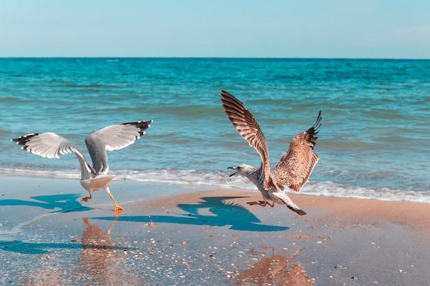 Une grande mouette blanche poursuit un autre oiseau au bord de la mer par une journée ensoleillée Photo Premium