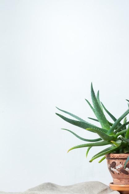Une grande plante d'aloès dans un pot en terre cuite ornée d'un ornement se dresse sur un tissu naturel sur une console blanche en face du mur blanc Photo Premium