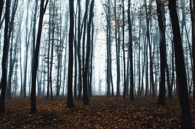 Grands Arbres Dans Le Brouillard En Forêt Photo Premium