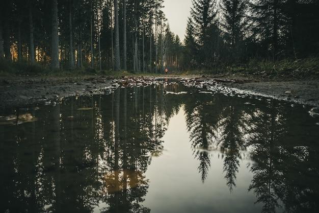 De Grands Arbres Forment La Forêt Reflétée Dans L'eau D'un Petit Lac Photo gratuit