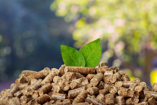Granulés De Bois Sur Fond Vert. Biocarburants. Photo Premium