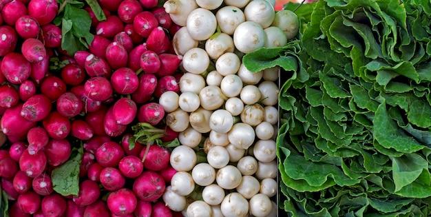 Grappes de radis, céleri et chou Photo Premium