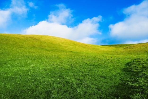 Green Summer Meadow Photo gratuit