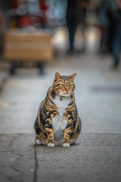 noir manger asiatique chatte
