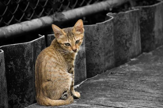 Gros chats assis sur le ciment au bord de la route. Photo Premium