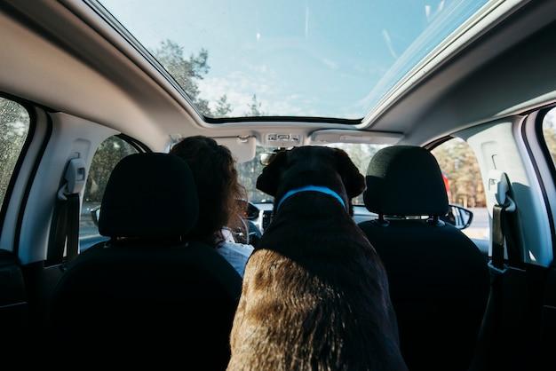 Gros chien noir en voiture Photo gratuit