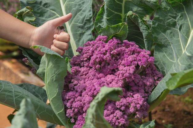 Gros fermier de la main dans le jardin au cours du concept de fond nourriture heure du matin Photo gratuit