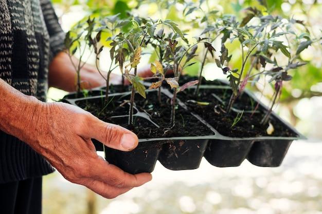 Gros jardinier tenant un plateau de semis Photo gratuit