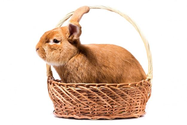 Gros lapin rouge moelleux dans un panier, isoler, lapin de pâques Photo Premium