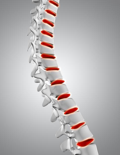 Gros plan 3d de la colonne vertébrale avec les disques en surbrillance Photo gratuit