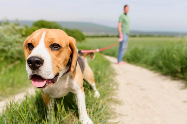 Gros Plan, Adorable, Beagle, Apprécier, Promenade, Dans Parc Photo gratuit