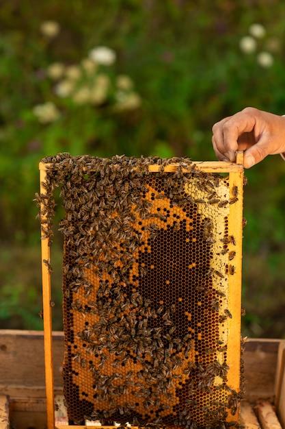 Gros plan de l'apiculteur tenant un nid d'abeille plein d'abeilles Photo Premium