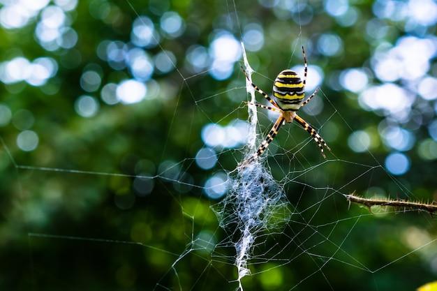 Gros Plan D'une Araignée Colorée Sur Une Toile Avec De La Verdure Sur L'effet Flou Et Bokeh Photo gratuit