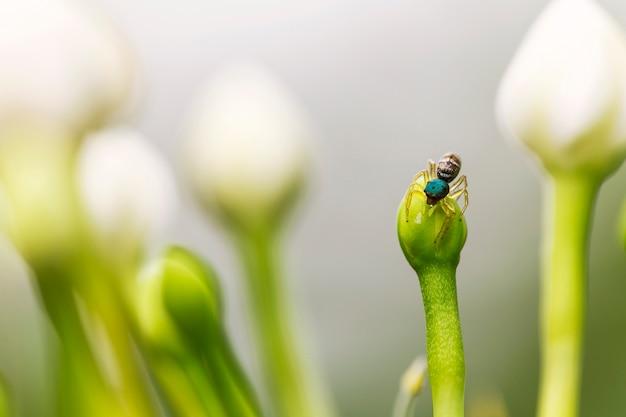 Gros plan araignée sur la fleur et fond de fleur blanche floue. Photo Premium