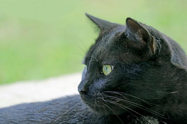 Gros plan, beau, chat noir, sur, île paques, chili, amérique sud Photo Premium