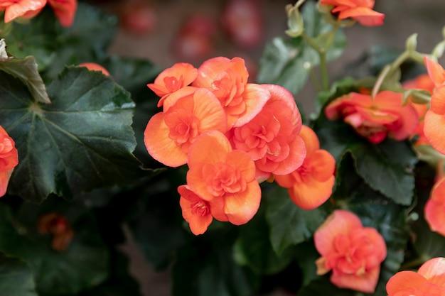 Gros Plan, Beau, Orange, Fleurs Photo gratuit