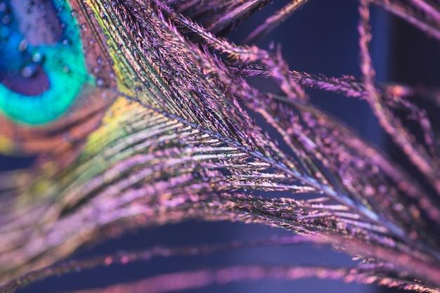 Gros plan belle texture de plume de paon Photo gratuit