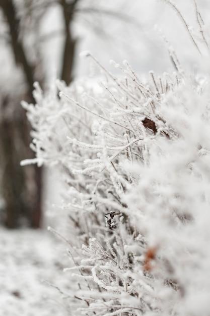 Gros Plan Blanc Des Branches De Branches Gelées Photo gratuit