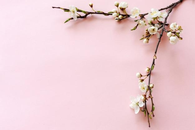 Gros plan d'une branche de cerisier en fleurs Photo Premium