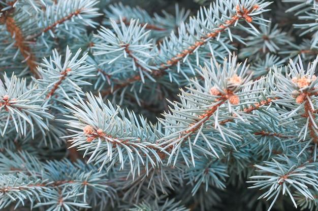 Gros Plan Des Branches D'arbres De Pin Photo gratuit