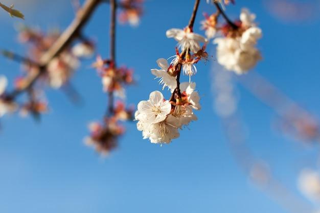 Gros plan de branches de fleurs roses sous un ciel bleu pur Photo Premium