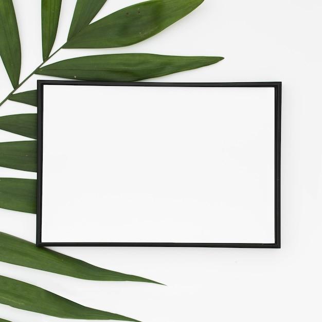 Gros plan d'un cadre vierge blanc avec des feuilles de palmier vert isolés sur fond blanc Photo gratuit