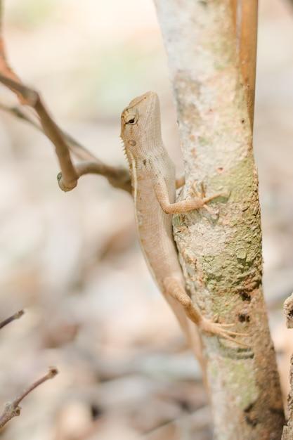 Gros plan d'un caméléon thaïlandais sur l'arbre. Photo Premium