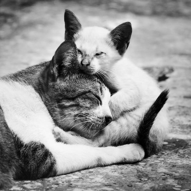 Gros plan de chats Photo gratuit