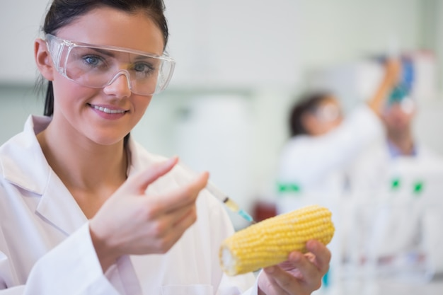 Gros plan d'un chercheur scientifique injectant des épis de maïs au laboratoire Photo Premium