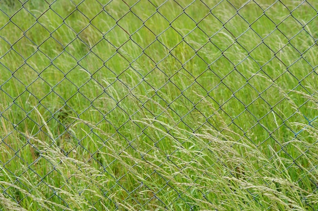 Gros Plan D'une Clôture Métallique Dans Le Domaine Plein D'herbes Vertes Photo gratuit
