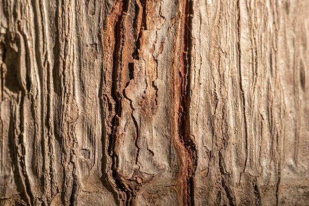 Gros Plan De Coquille D'arbre Fond Organique Photo gratuit