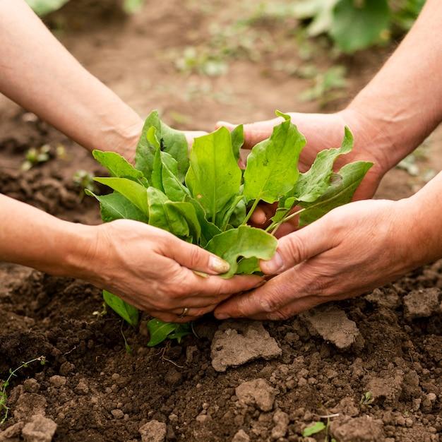 Gros plan, couple, récolte, dans, jardin Photo gratuit