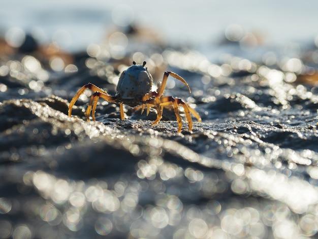 Gros Plan D'un Crabe Soldat Bleu Clair Sur La Plage Photo gratuit