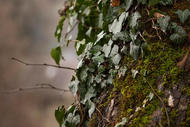 Gros Plan, Détail, De, Forêt Sauvage Photo gratuit