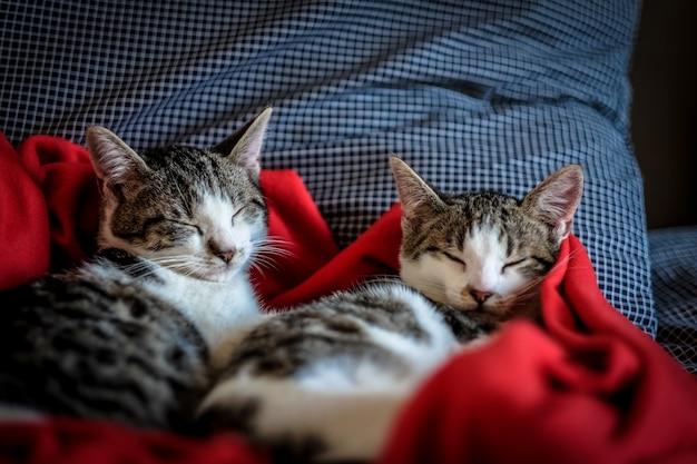 Gros Plan De Deux Chats Mignons Dormant Dans Une Couverture Rouge Photo gratuit