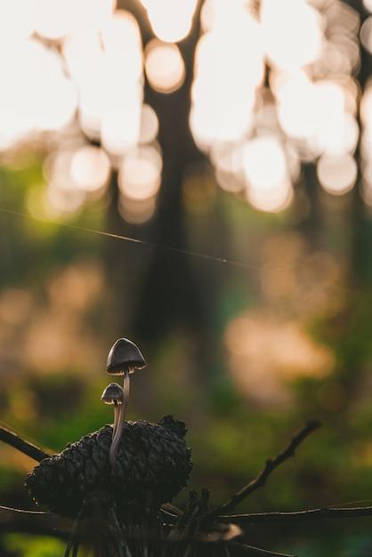 Gros Plan De Deux Petits Champignons Communs Dans Une Forêt Entourée De Verdure Photo gratuit