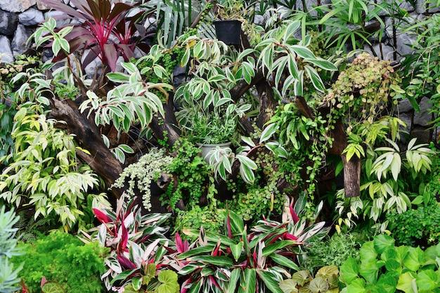 Gros plan de diverses plantes ornementales Photo Premium