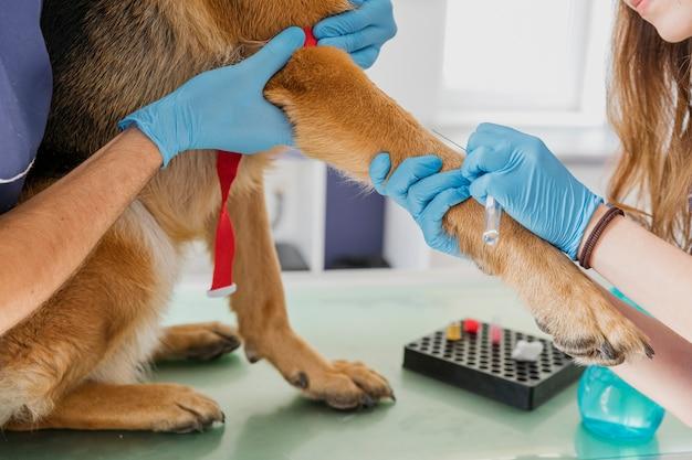 Gros plan, docteur, faire chien, a, injection Photo gratuit